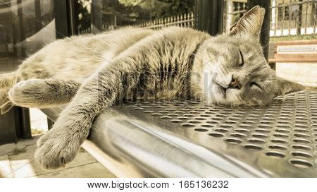 Gray Stray Cat Sleeping At The Bus Station