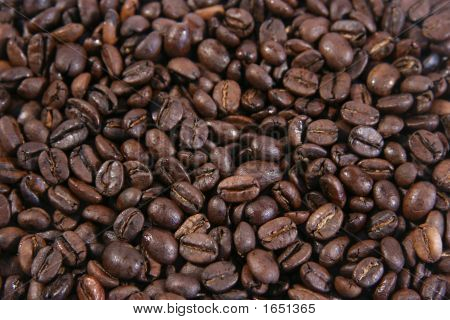 Coffee Beans Galore