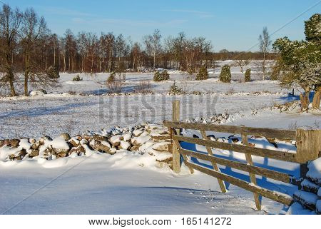 Wintry landscape with an old wooden gate and stone walls at the swedish island oland