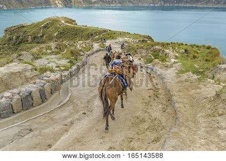 QUILOTOA, ECUADOR, FEBRAURY - 2016 - Tourists riding mules with native trainers at road in Quilotoa lagoon Ecuador