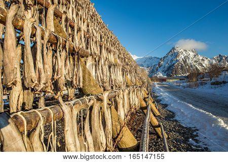 Racks full of dried codfish, Svolvaer, Lofoten, Norway