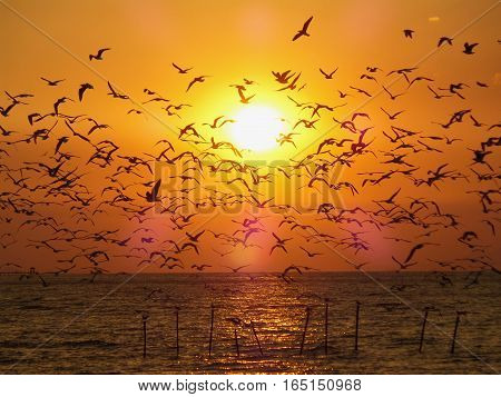 Breathtaking View of Uncountable Flying Seagulls Against the Golden Morning Sun over the Sea, Thailand