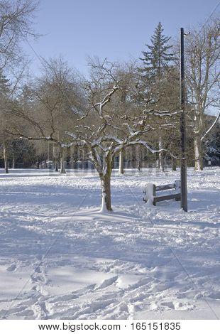 Seasonal changes winter snow in a public park.