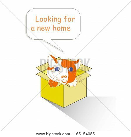 Typography banner Looking for a new home, red and white cartoons cat in the yellow box on white, stock vector illustration