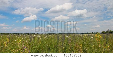 Wildflower Field, Planted For Soil Improvement