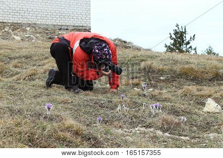 photographer takes a picture of a pasque-flower