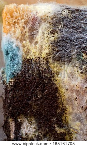 Mold on the food surface. Detail of a piece of wheat bread.