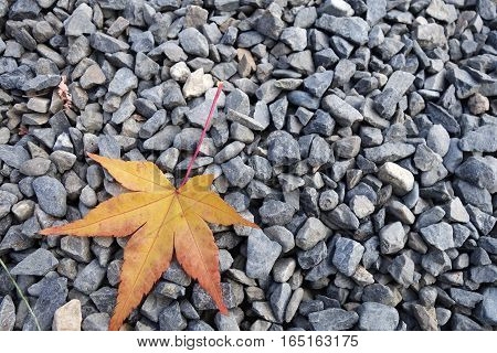Yellow Leave Lie On Unpolished Natural Stone