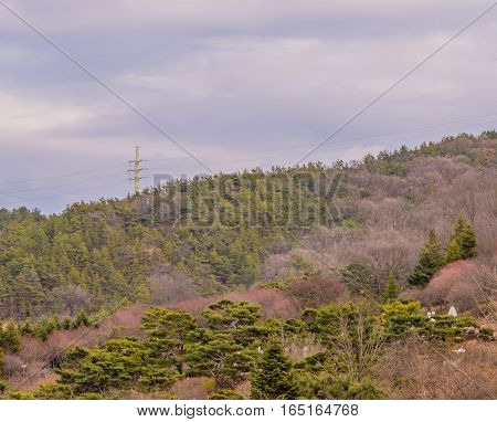 Beautiful sky with white puffy clouds over a wooded area at the foot of a mountain