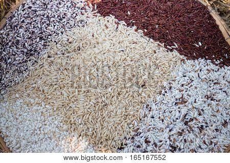 Thai rice varieties of brown rice mixed wild rice white rice and sticky rice stock photo
