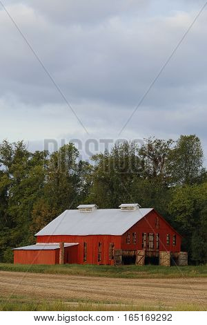 A bright red barn full of tobacco with doors open. Copyspace at the top.