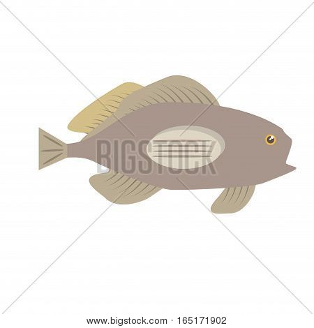 grouper fish side view sea life vector illustration eps 10