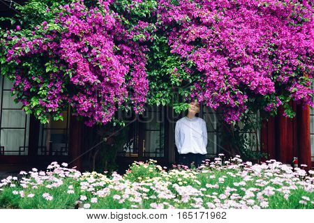 Single young Chinese girl standing under blooming flowers of Bougainvillea spectabilis, with eyes closed, in Lijiang city, China