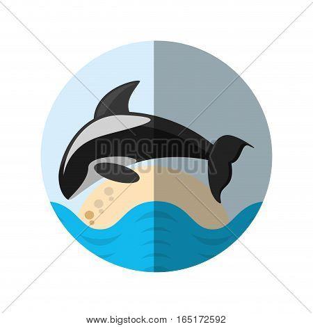 killer whale marine wildlife species badge shadow vector illustration eps 10