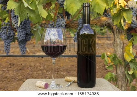 A photo of a bottle and glass of red wine, with a cork and corkscrew, on a blurred background of a vineyard at harvest time, with hanging branches of grapes