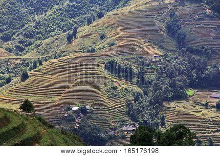 Rice fields in the mountains near Sapa in Vietnam
