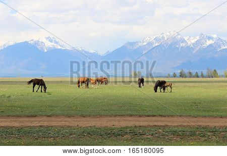 Horses in a pasture in the valley