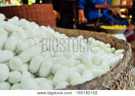 Silkworm Fibers In The Fabric Industry.