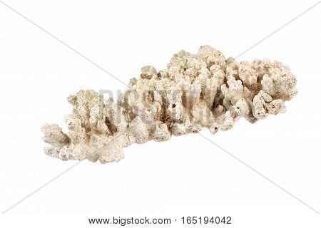 White coral rock isolated on white background