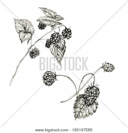 Raster monochrome sketchy raspberry and strawberry isolated on white. Food, catering, decoration themes, design element, illustration for books and magazines.