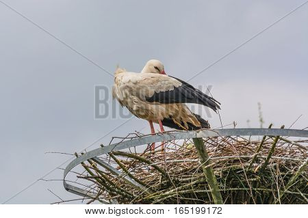 Two storks on the nest at the nest building