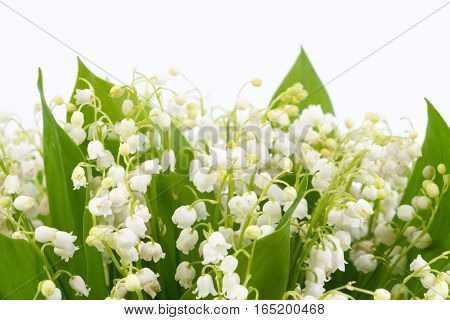 Lilies Of The Valley Isolated On White Background.