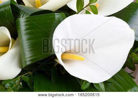 Blossoms Of White Calla Lilies (zantedeschia)