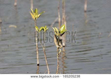 A skinny long legged bird clinging on a shoot of a tree