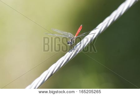 A colorful shiny Dragonfly on a steel cable