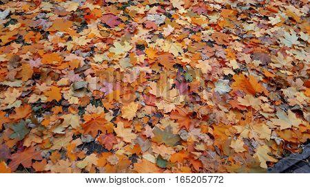 Background. Autumn leaves of maple, linden, poplar, birch.
