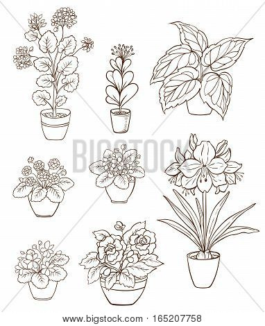 Set of various houseplants on a white background. Violets and geranium in flower pot. Hand drawn vector illustration.