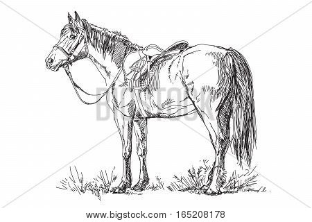 Vector illustration: Horse with saddle and bridle