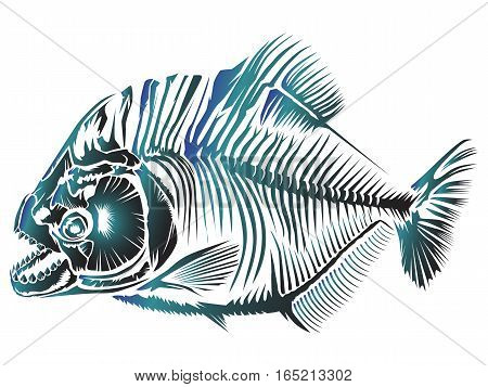 Piranha Isolated Xray