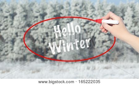 Woman Hand Writing Hello Winter With Marker Over Snowy Forest.