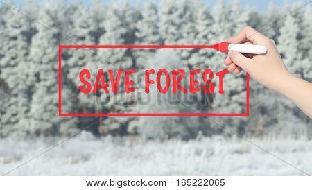 Woman Hand Writing Save Forest With Marker Over Snowu Trees.