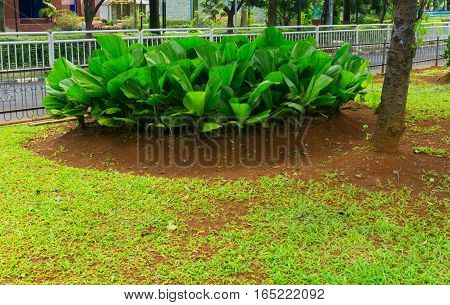 Green bush in the middle of grass field photo taken in Jakarta Indonesia java