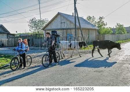 Sungurovo, Russia - May 24, 2008: Tourists with backpack and bicycle stop in village on road with cows