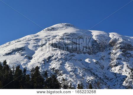 Snow covered mountains and pinetrees in north Italy