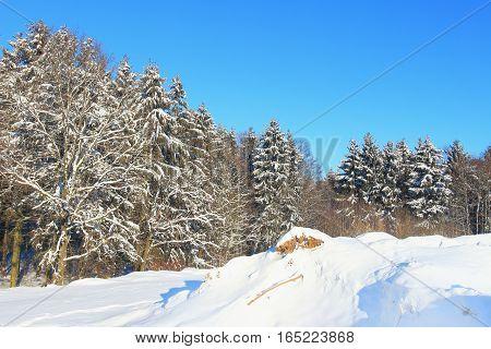 Beautiful winter landscape. Winter forest background space landscape.