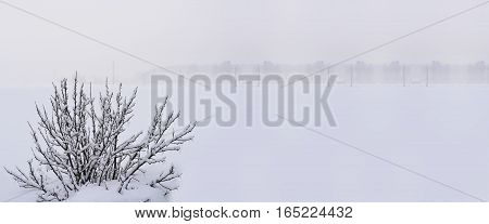 Winter nature photo. The first snow in the season.