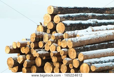 Stack Of Wooden Logs.