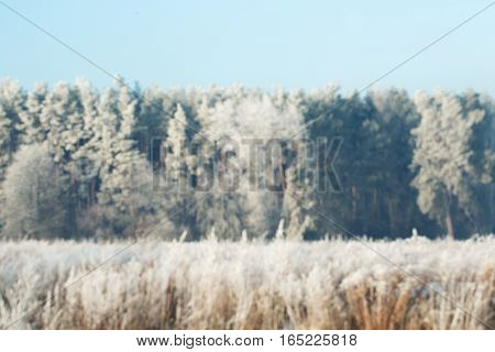 Blured Background Of Snowy Forest. Winter Bokeh