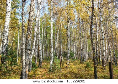 A beautiful and enchanting forest in a cool autumn day