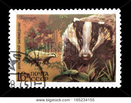 SOVIET UNION - CIRCA 1975 : Cancelled postage stamp printed by Soviet Union, that shows Badger.