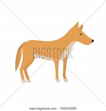 Dingo. Cartoon character. Australian dingo dog. Zoo illustration Wild animal