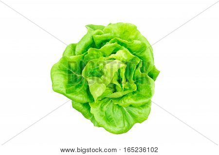 Top view of butterhead lettuce vegetable isolated on white.