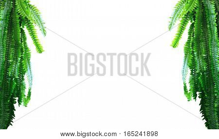 Green Leaves Branch Palm Isolated On A White Background, Copy Space Empty
