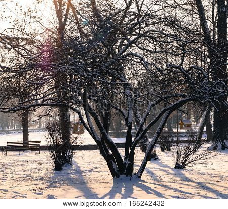 beautiful winter landscape in the Park bird feeders on the tree