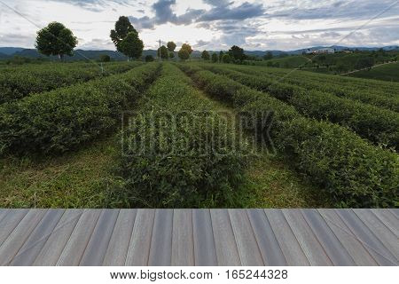 Opeing wooden floor Green tea plantation line over high hill in North of Thailand