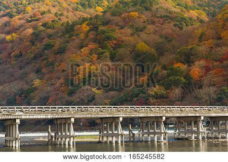 Togetsukyo bridge pass through Arashiyama forest during Autumn season Japan